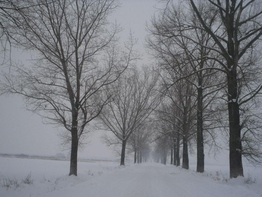 În noaptea de joi spre vineri se reinstaurează iarna în Banat