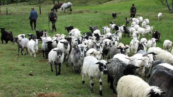 Avans APIA și pentru crescătorii de animale!