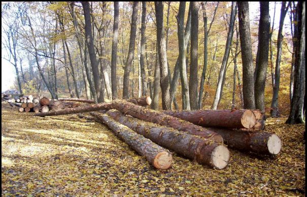 Bănuit de tăierea ilegală a unor arbori