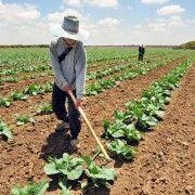 Valoarea producţiei agricole a scăzut cu 15,4% în 2020