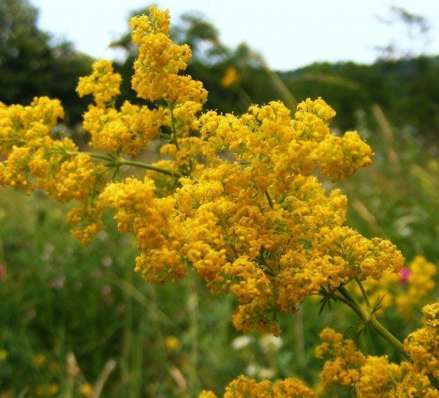 Afla care sunt florile preferate ale locuitorilor din judetul Arad! Un studiu scoate la iveala rezultate surprinzatoare