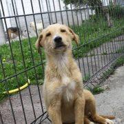Târgul de Adopție Canină a ajuns la cea de-a VIII-a ediție