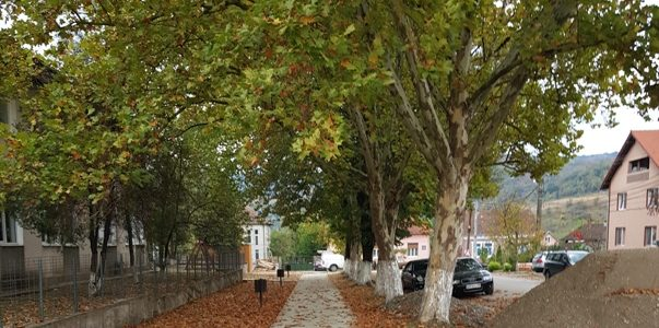 Primăria Gurahonț masacrează arborii din comună