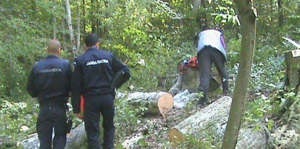 Un bărbat din Vârfurile a tăiat ilegal mai mulți arbori