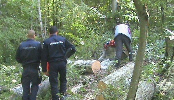 Angajat la Ocolul Silvic Zărandul este anchetat pentru tăieri ilegale