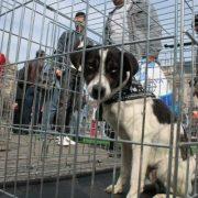 Târgul de adopție canină, la a X-a ediție