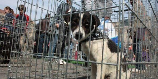 Târgul de adopție canină, în acest weekend