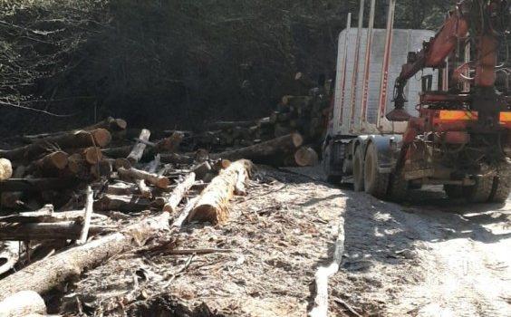 Controale în zona Moneasa la societățile de exploatare a masei lemnoase