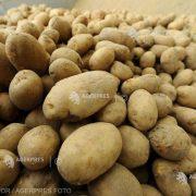 România este al şaptelea producător de cartofi din UE