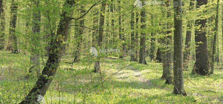 """ASFOR propune documentul de strategie """"România Verde în 10 paşi"""" pentru relansarea economiei forestiere"""