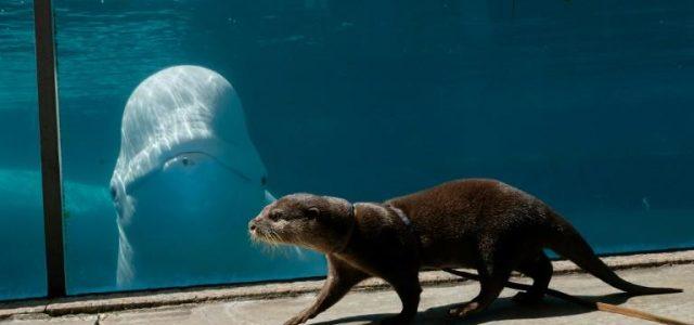 Coronavirus: Vizite între specii la un aquarium din Japonia
