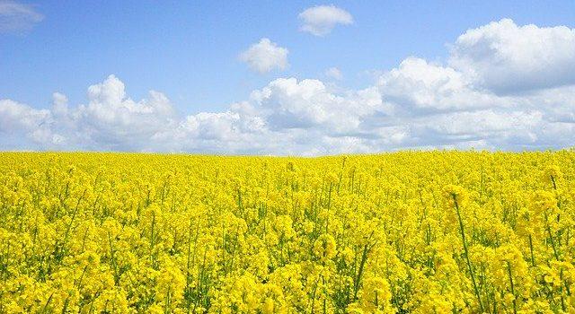 Ministrul Agriculturii: Aproape un milion de hectare sunt afectate de secetă