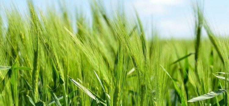 Oros: Fermierii vor fi stimulaţi să intre în cooperative, pentru a-şi vinde produsele la preţuri competitive