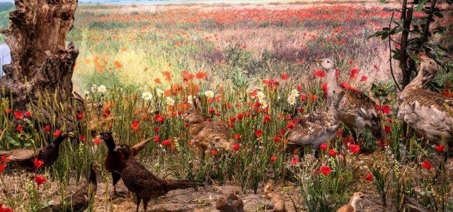 Redeschiderea Muzeului de Științe ale Naturii:  biodiversitatea fascinantă a județului Arad, într-un un nou concept expozițional