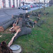 Continuă acțiunea de toaletare a arborilor din municipiul Arad