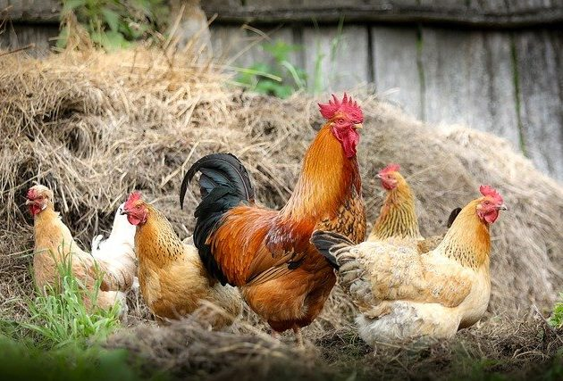 Se suspendă activitățile comerciale cu păsări vii pentru o perioadă de 30 de zile