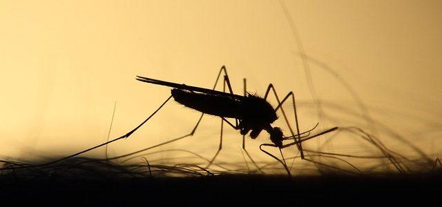 Nu vă bucurați că scăpăm de ploaie, vom da de țânțari!