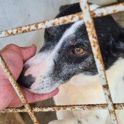 Expoziție canină cu adopție, la finele acestei săptămâni