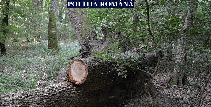 Depistat în trafic băut și cu lemne furate