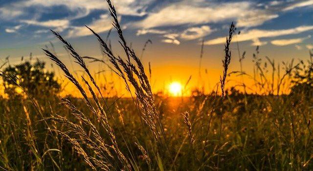 Cea mai mare producţie de grâu după aderarea României la UE