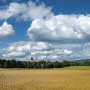 APIA demarează plata în avans pentru fermierii care au depus Cereri unice de plată în anul 2021